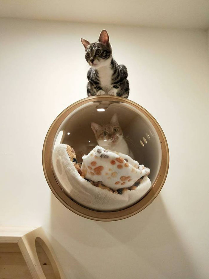 cat-spaceship-bed-myzoostudio-5bb6032e5e284__700