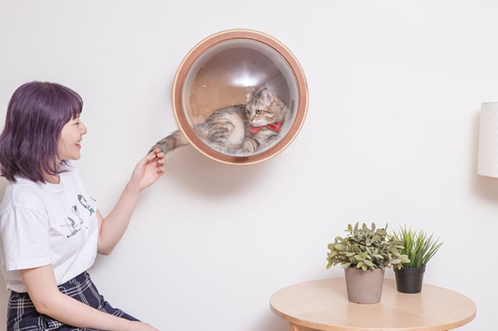 cat-spaceship-bed-myzoostudio-5bb60331301d9__700