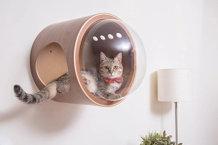 cat-spaceship-bed-myzoostudio-7-5bb5f8b499953-png__700